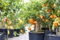 растения для зимнего сада 1
